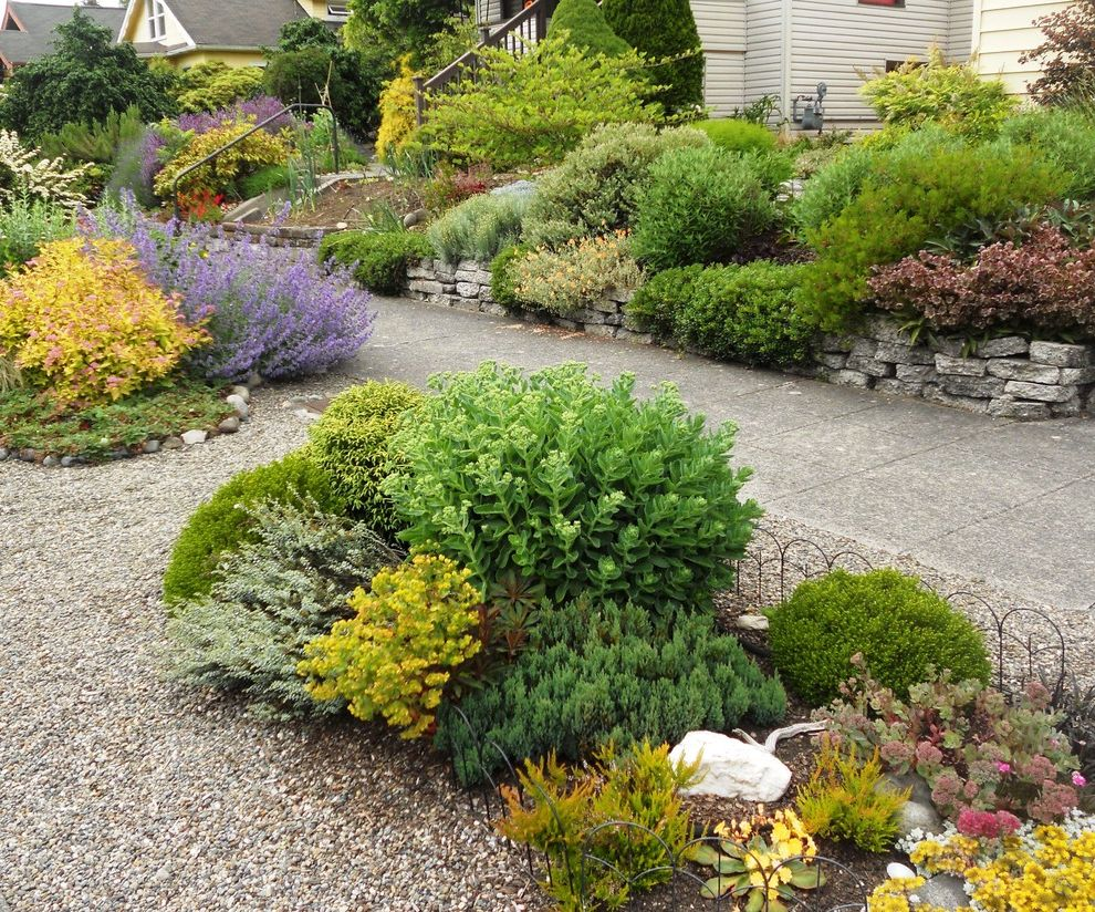 Russian Blue Cat Pictures   Traditional Landscape Also Gravel Perennial Borders Purple Flowers Small Bushes Stacked Stone Urbanite Retaining Wall Yellow Leaves