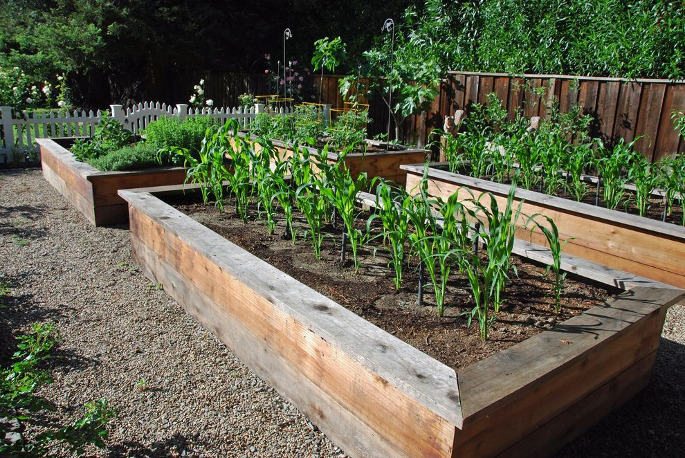 How Wide is a Full Bed   Traditional Landscape  and Box Corn Garden Gravel Kitchen Garden Path Picket Fence Vegetables Veggies Wood