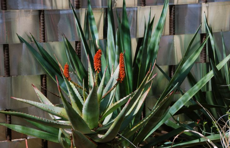 Wimsatt Building Supplies   Modern Landscape  and Modern