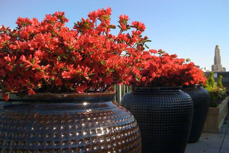 Azaleas Nyc with Contemporary Deck  and Azaleas Ceramic Ceramic Pots Container Garden Container Plants Containers Garden New York Planters Plants Pots Potted Plants Roof Terrace