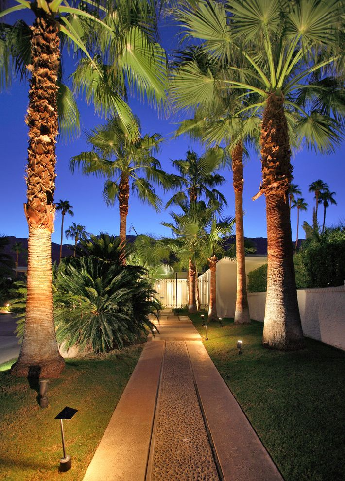 Lowes Palm Coast   Midcentury Landscape Also Lit Path Outdoor Lighting Palm Tree Allee Palm Trees Path