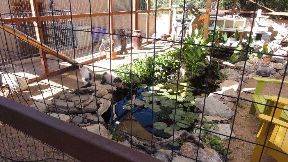 Male Cat Spraying with Eclectic Landscape Also Cat Enclosure Koi Outside Pet Pet Door Pet Enclosure Pond