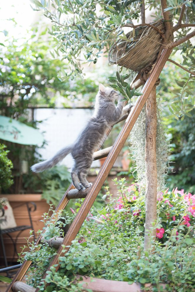 Male Cat Spraying with Shabby Chic Style Landscape  and Cat Cat Lover Cats Cuccia Gatti Gatto Pet Pet Space Scala Shabby Chic Ulivo