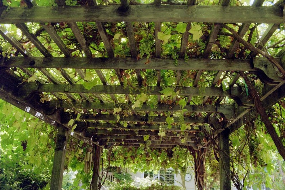 Vineyard Vines Wallpaper   Traditional Landscape  and Arbor Covered Walkway Grape Vines Pergola Trellis
