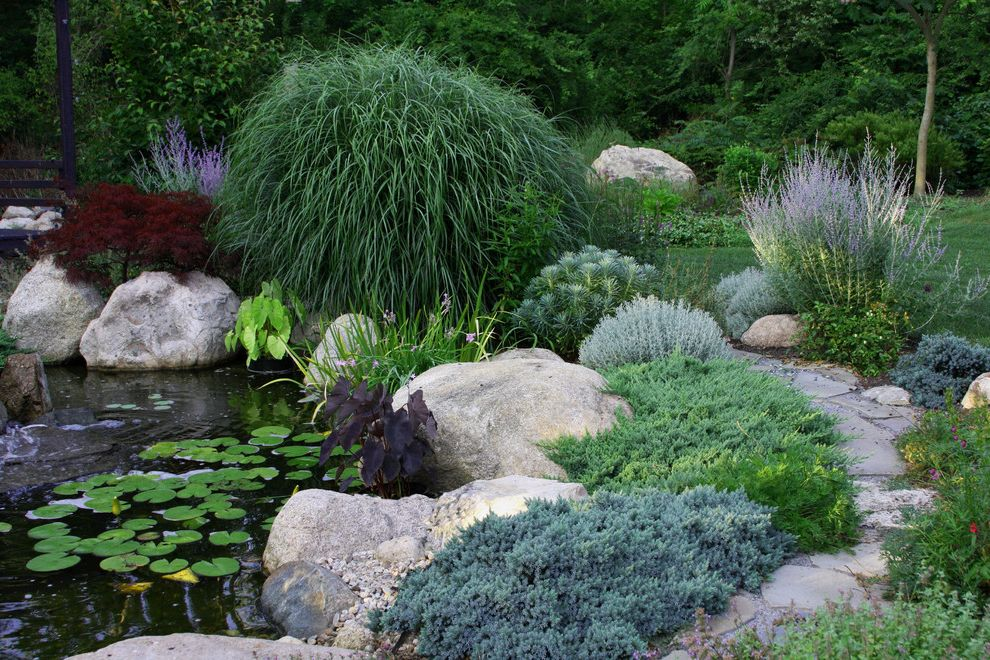 All Star Limo with Traditional Landscape Also Boulder Grasses Groundcover Japanese Maple Lavender Lily Pad Pond Stone Woodland Edge