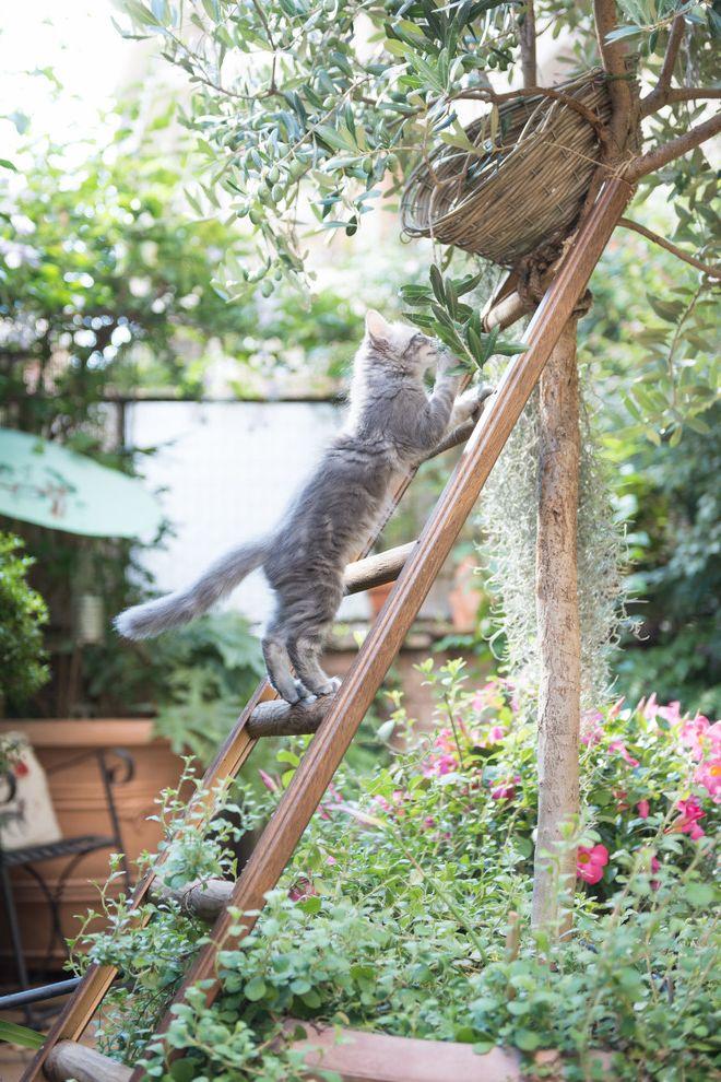 Do Male Cats Spray   Shabby Chic Style Landscape  and Cat Cat Lover Cats Cuccia Gatti Gatto Pet Pet Space Scala Shabby Chic Ulivo