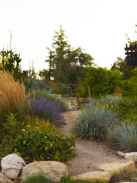 Lowes Paso Robles   Mediterranean Landscape Also Boulders California Dg Grasses Lavender Leymus Native Natural Paso Robles Phlomis Rock Stone