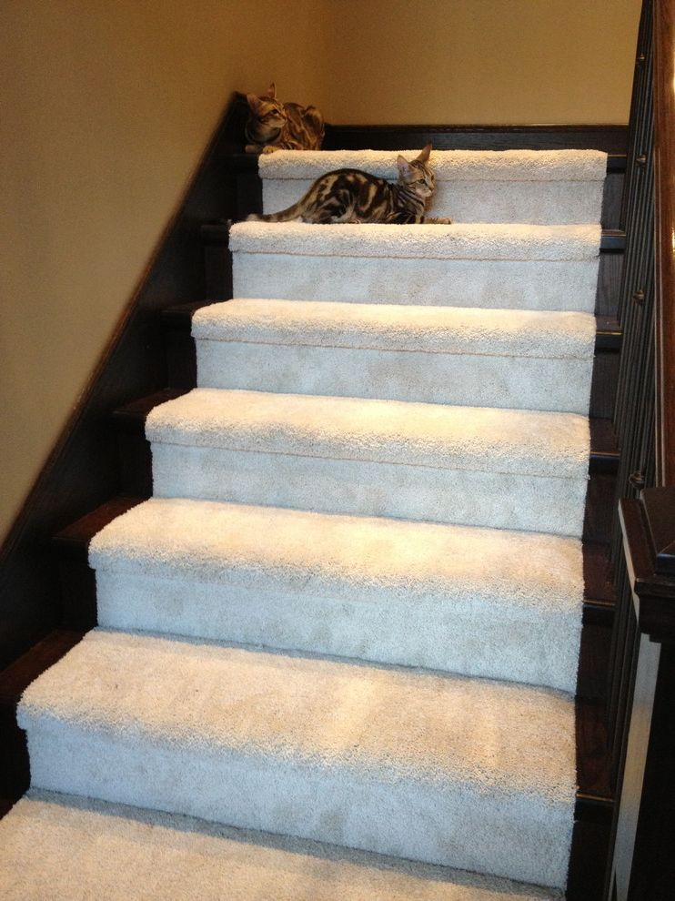 Mohawk Smartstrand Silk    Staircase  and Carpet on Stairs Custom Carpet Durable Carpet Mohawk Smartstrand Carpet Mohawk Smartstrand Silk Carpet on Stairs Silk Carpet Smartstrand Smartstrand Carpet Soft Carpet Stainproof Carpet Stair Carpet