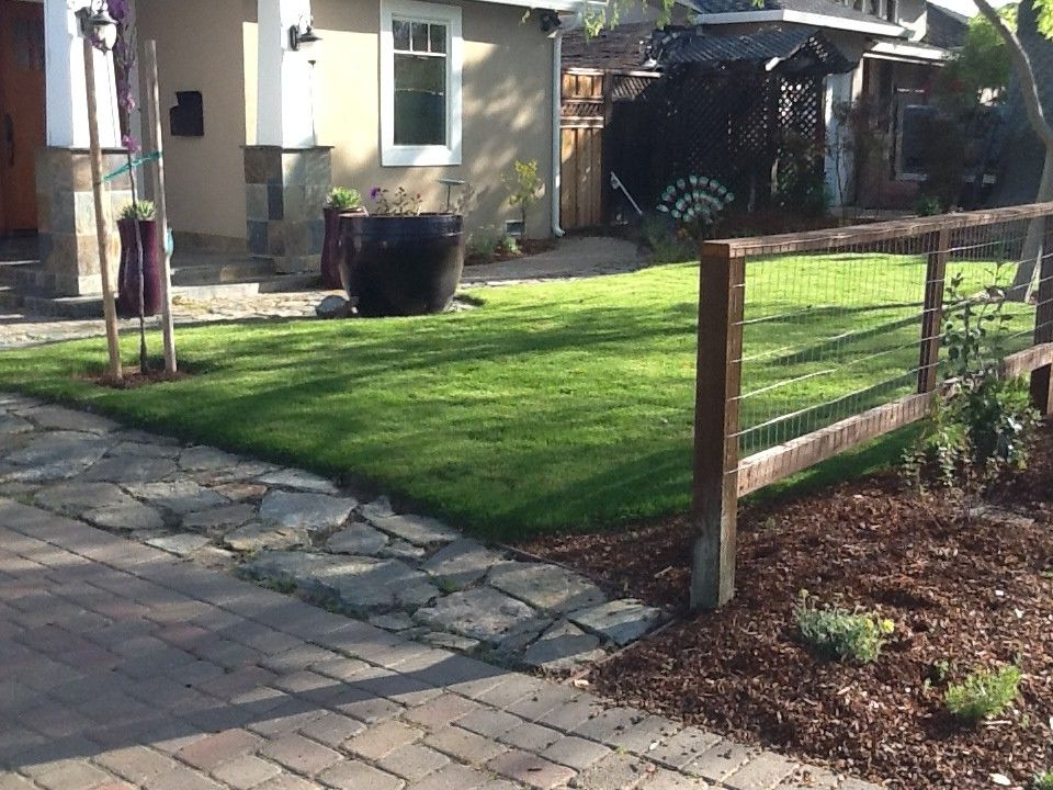 Delta Bluegrass with Contemporary Spaces  and Ceanothus Cleaveland Sage Delta Bluegrass Native Sod Erigeron Native Bent Grass Sod Native Blend Sod Native Garden Native Plants Penstemon Privacy Screening