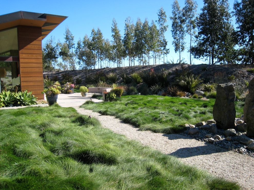 Delta Bluegrass with Eclectic Landscape Also Native No Mow Grass From Delta Blue Gras