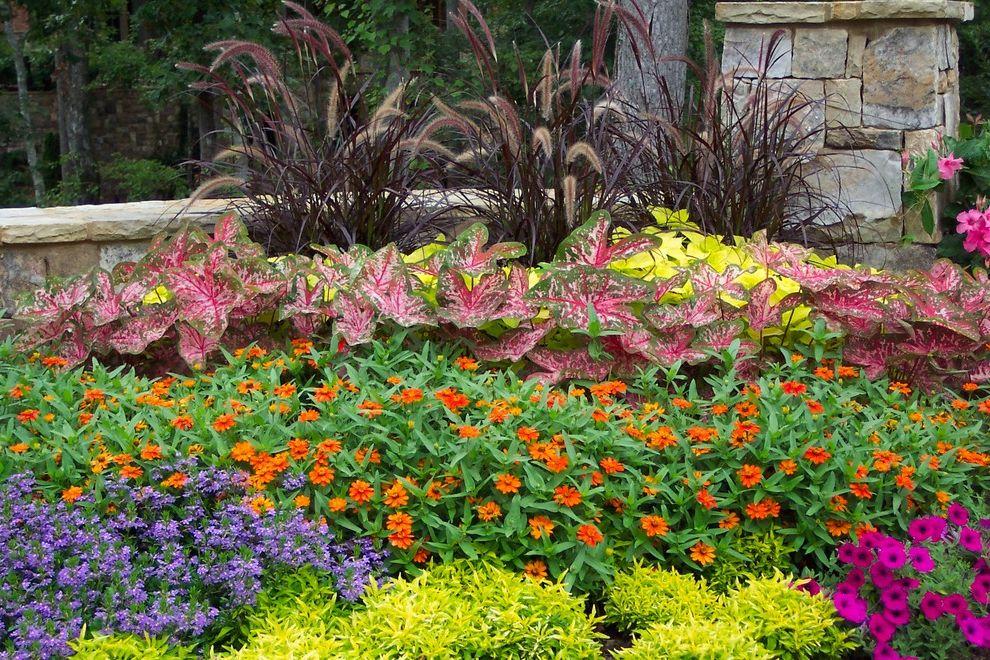 Esperanza Plant    Landscape  And