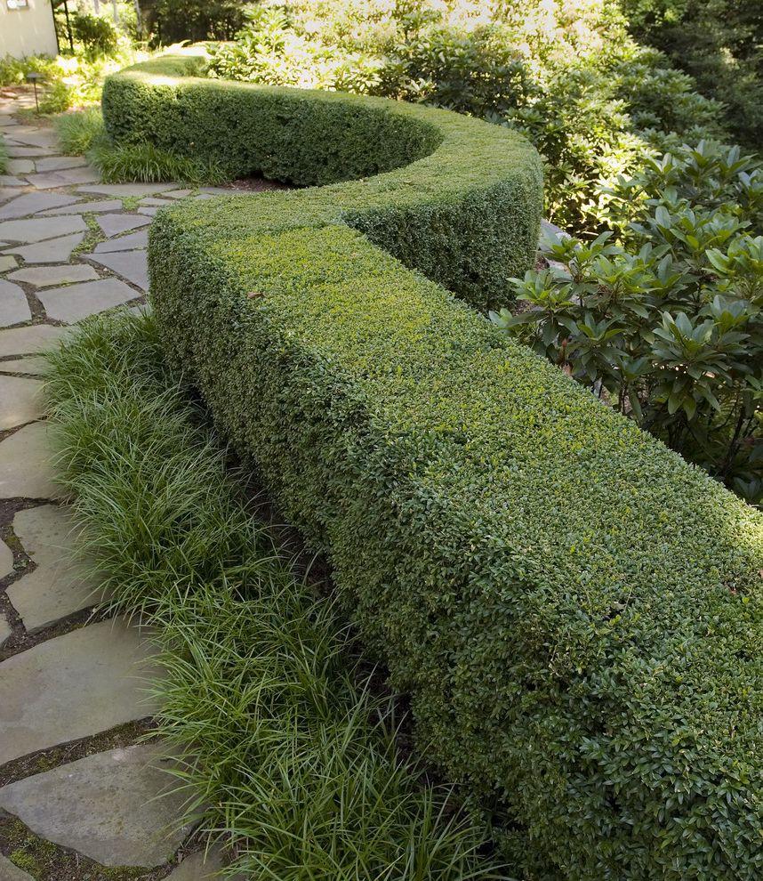 Esperanza Plant with Mediterranean Landscape Also Boxwood Garden Hedge Landscape Design
