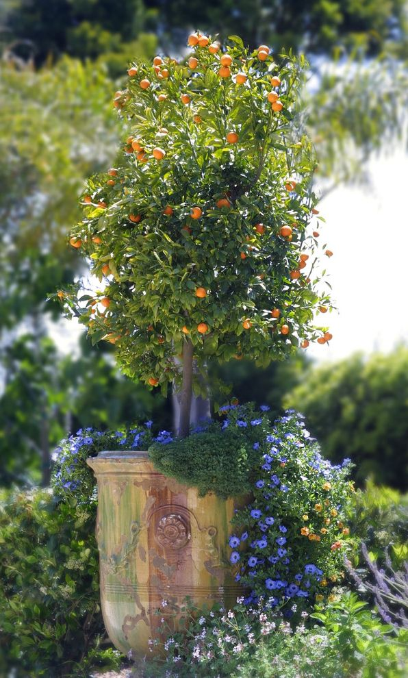 How to Get Rid of Fruit Flys   Traditional Landscape  and Anduze Pots Citrus Classic Design Lobelia Planter Pot