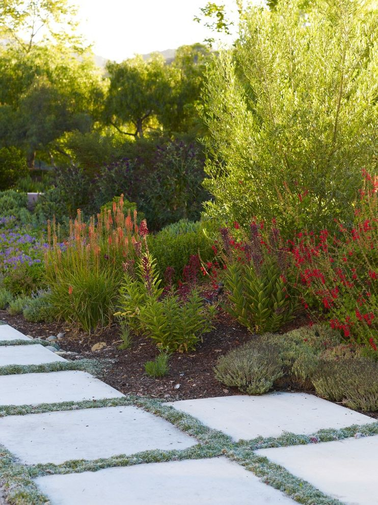 Lowes Simi Valley   Mediterranean Landscape Also California Concrete Garden Groundcover Low Maintenance Low Water Mediterranean Natives Natural Olive Tree Orange Outdoor Living Path Paver Perennial Pool Regional Stone Walkway