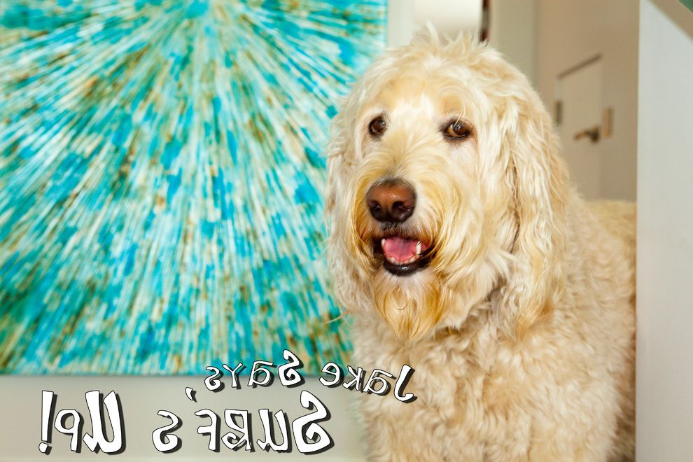 Pets on Broadway with Contemporary Spaces  and Art Dog Jake Labradoodle Painting Pet
