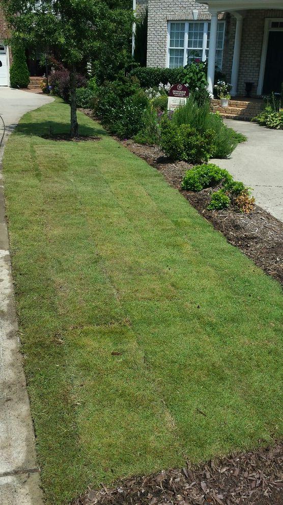 Supersod   Contemporary Landscape Also Emerald Emerald Zoysia Lawn Garden New Sod Zoysia Zoysia Sod