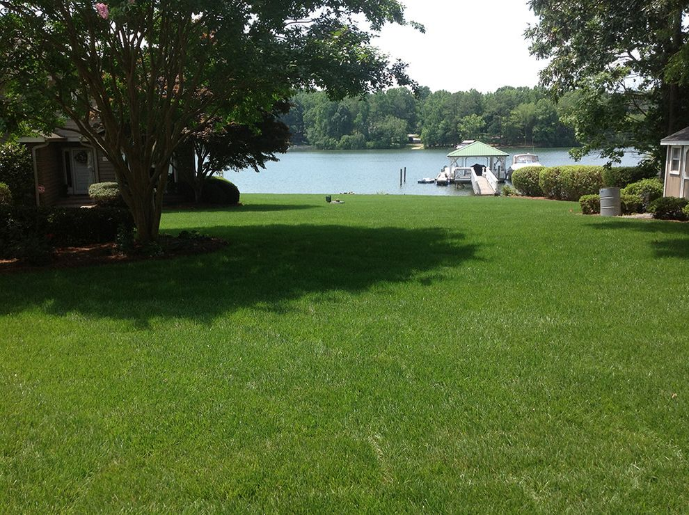 Supersod   Traditional Landscape  and Boathouse Elite Tall Fescue Fescue Sod Lawn Garden Sod Tall Fescue Tall Fescue Lawn