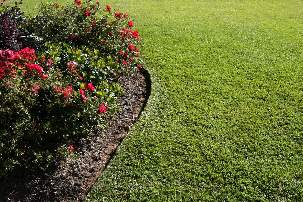Supersod   Transitional Landscape Also Centipede Centipedegrass Knockout Rose Lawn Lawn Garden Sod Tifblair
