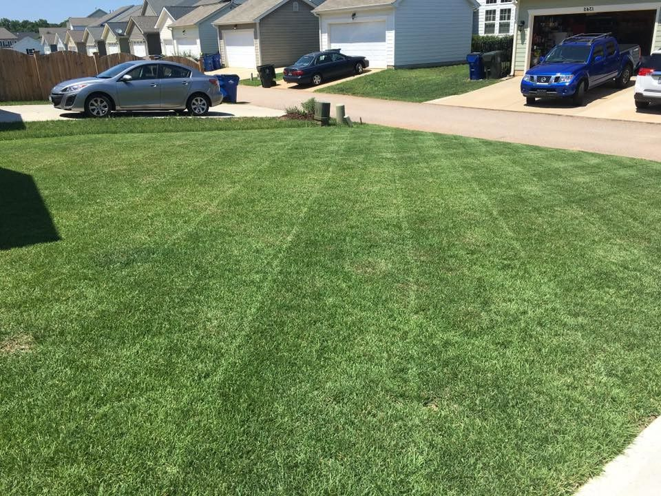 Supersod with  Landscape  and Lawn Garden Lawn Maintenance Wide Blade Zoysia Zenith Zoysia Zoysia