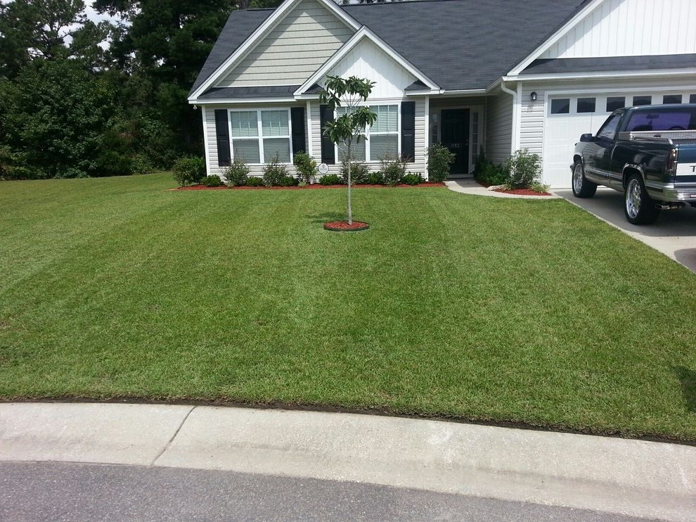 Supersod with Traditional Landscape  and Centipede Centipedegrass Lawn Garden Tifblair