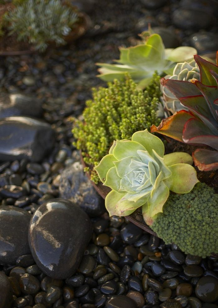 Terrarium Definition with Beach Style Landscape  and Beach Coastal Corten Bowl Mexican Pebble Morro Bay Succulent