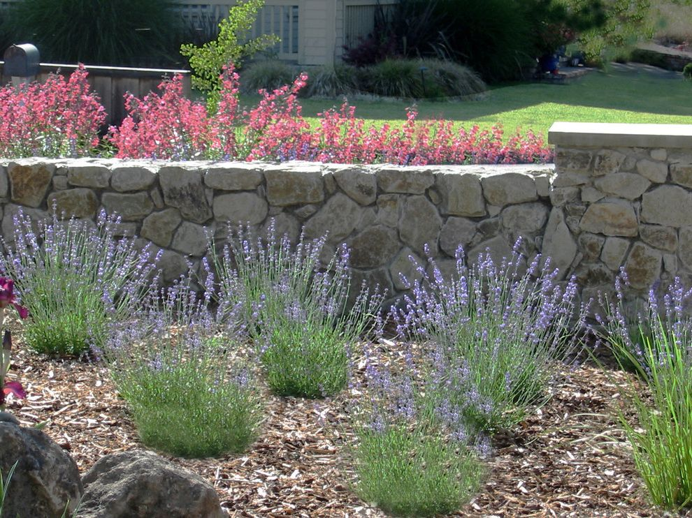 When to Plant Sunflowers with Mediterranean Landscape  and Driveway Entry Grass Lavender Lawn Low Maintenance Low Water Natural Planter Rock Stone Turf Wall