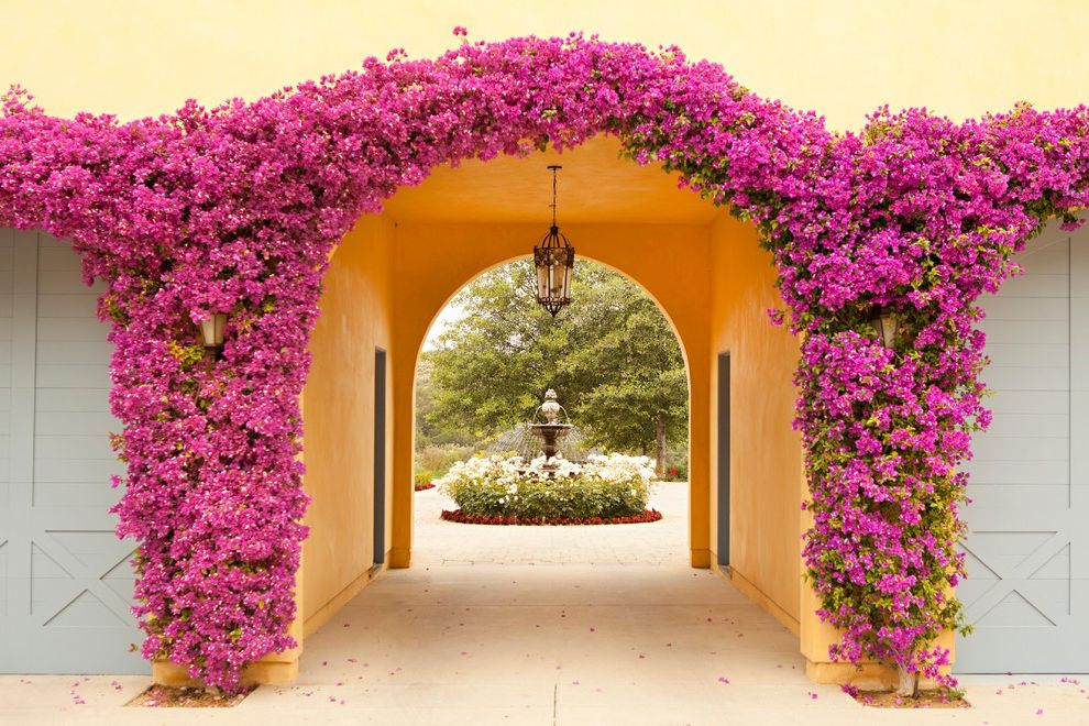 Lowes Monroe La   Mediterranean Landscape Also Archway Bright Pink Flowers Climbing Plants Flower Arch Pendant Light