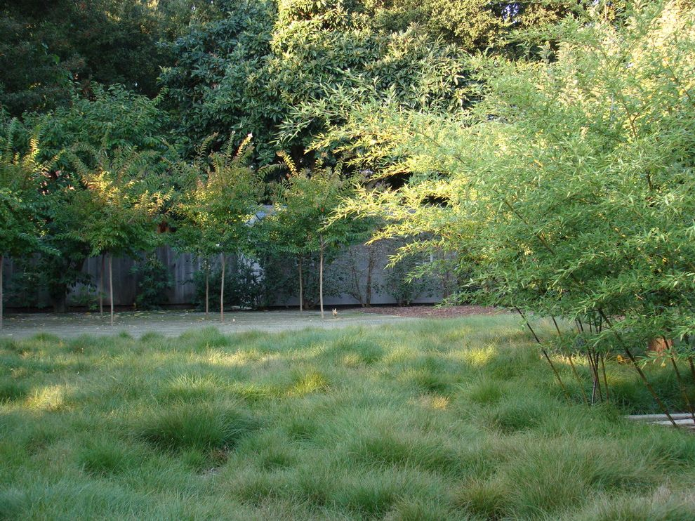 Weedman Lawn Care with Contemporary Landscape  and Bamboo Grasses Meadow Palo Alto Tree Cluster