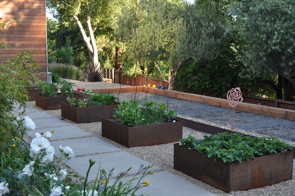 How long does it take to grow tomatoes Contemporary Landscape raised planter vegetable garden walkway wooden fencing